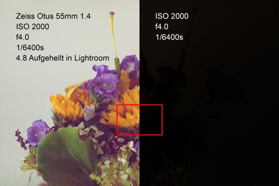 Canon 5DS/R ISO 2000, f4.0, 1/6400s Zeiss Otus 55mm f.14 Um 4.8 Blenden in Lightroom aufgehellt